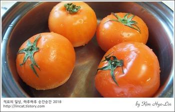 [적묘의 간단레시피]토마토tip,토마토 삶기, 토마토 주스, 토마토 소스용