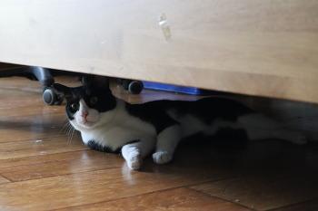 [고양이] 호동냥이와 귀욤냥이의 하루