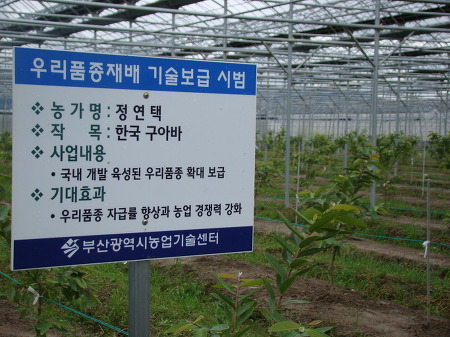 구아바( 우수 신품종) 재배 농장 현장 방문 기술전수