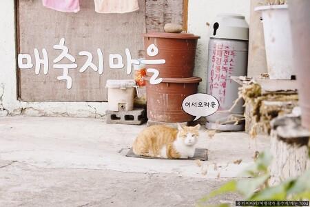 [부산 여행] 영화 촬영지 출사지 부산 매축지 마을