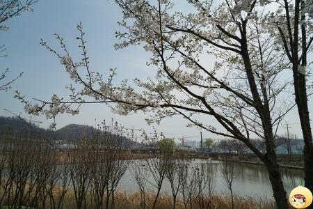 봄에 다시 만난 항동기찻길 & 푸른수목원 (까칠양파의 서울 나들이 ep74)