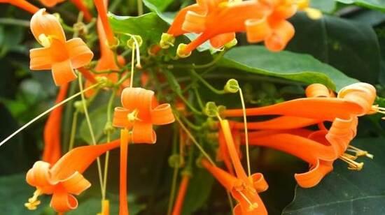 대전 가볼만한곳 한밭수목원 열대식물원, 곤충박물관