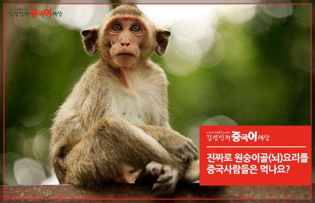 [중국문화] 진짜로 원숭이골(뇌)요리를 먹나요?