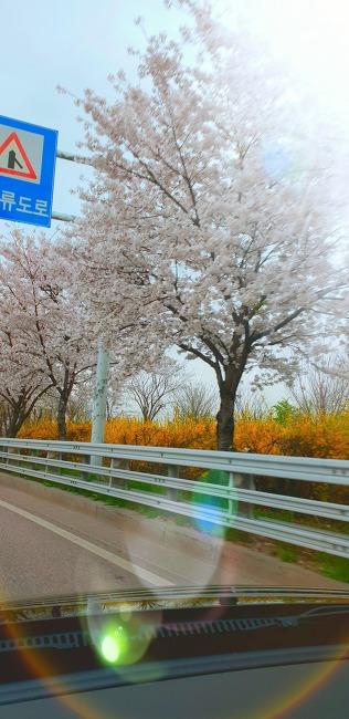 따사로운 봄 출근길...^^