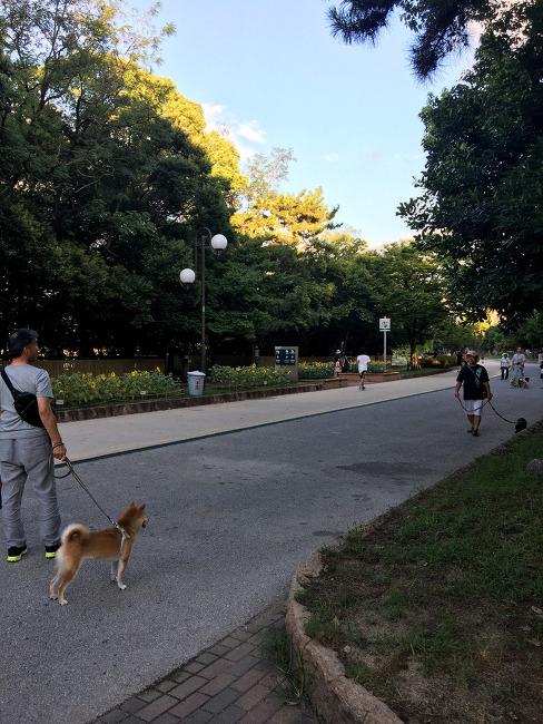 후쿠오카 여행 일정 오호리 공원 왔어요