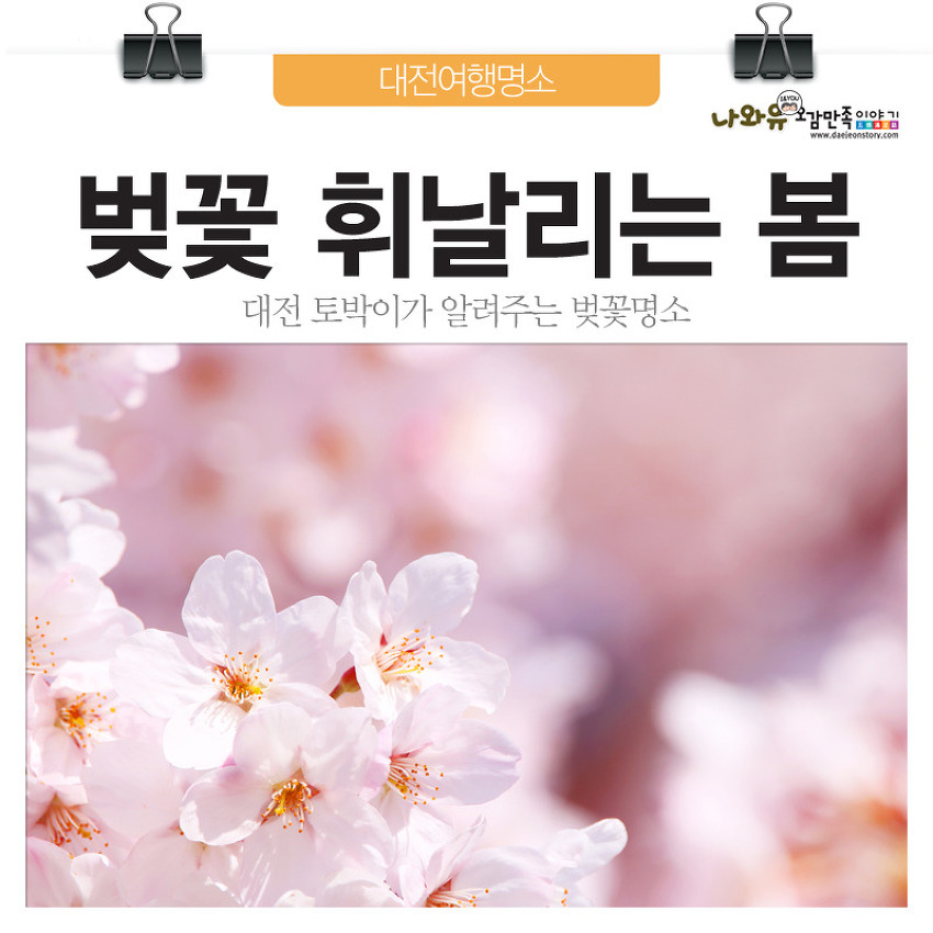 대전 토박이 추천! 대전 벚꽃여행코스 20곳