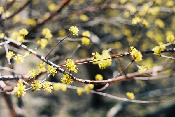 [poise] 봄빛