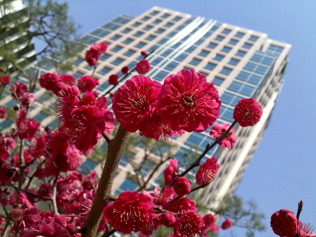 대구에도 봄이 - 국채보상운동공원에서 by Ara