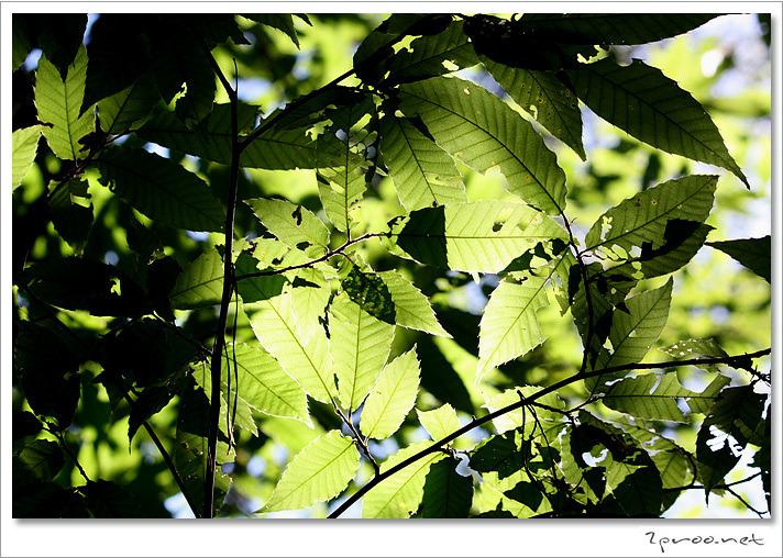 가을사진, 가을 풍경사진