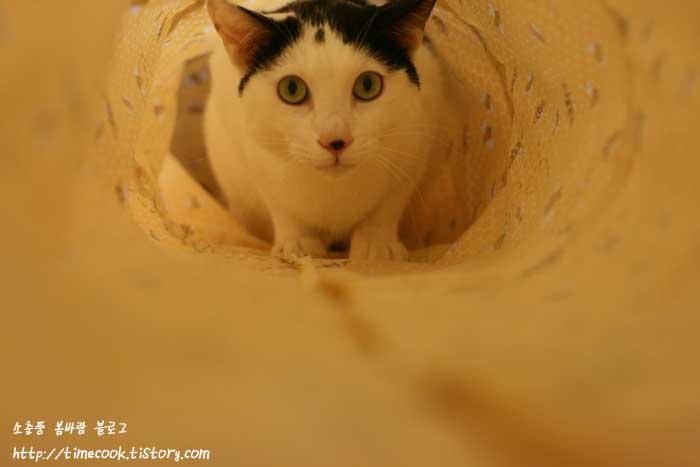 고양이 터널 만들기, 고양이 터널 재료, 고양이, 고양이 동영상, 고양이 터널, 리뷰, 고양이 용품, 고양이 본능, 사진