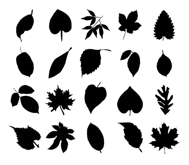 무료일러스... Oak Leaf Pictures Clip Art
