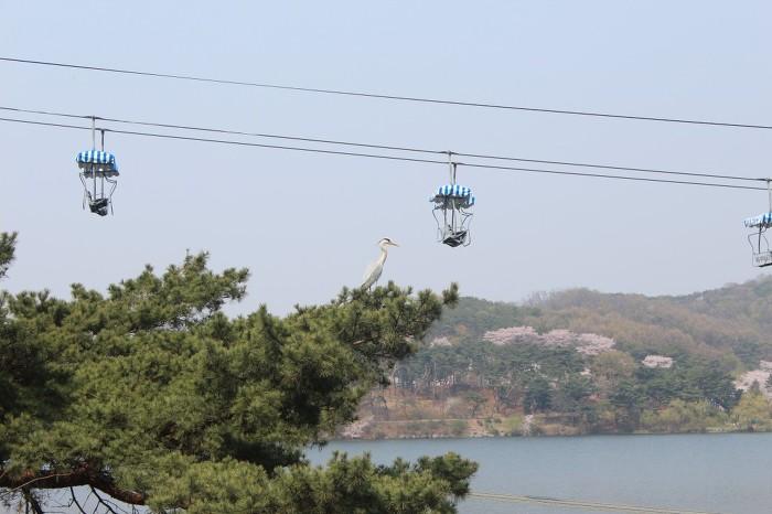 서울대공원에 진짜 두루미? 신기하네요