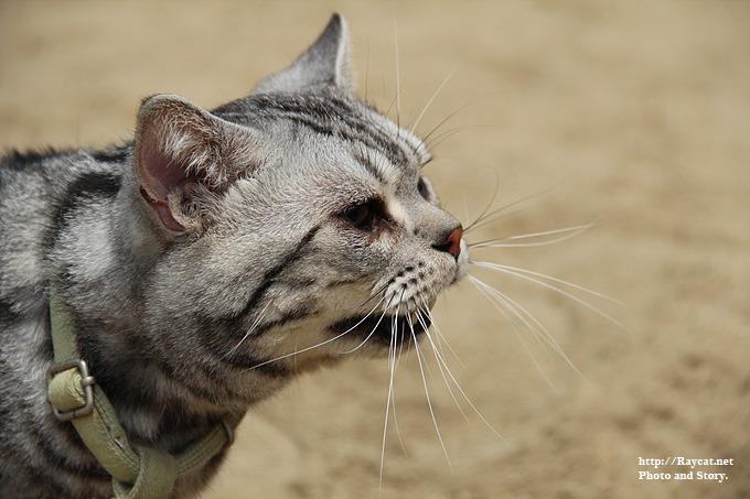 채터링 하는 고양이