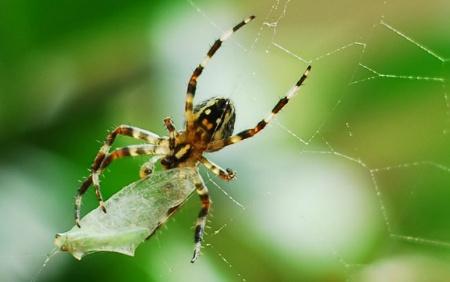 거미_거미줄