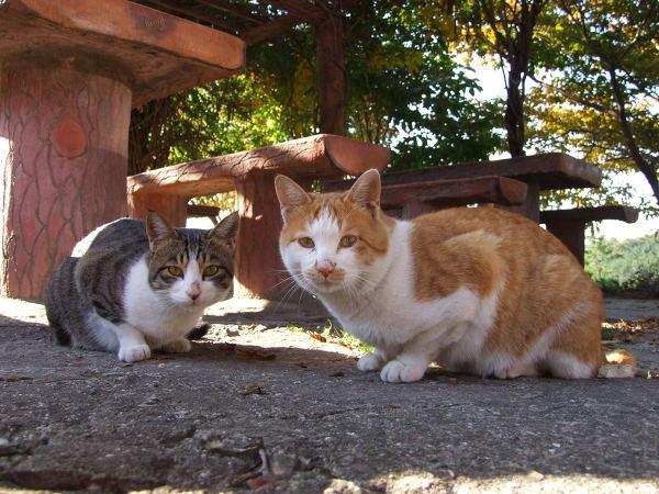 가나안 수양관 고양이