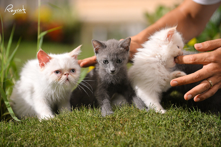 아기 고양이들