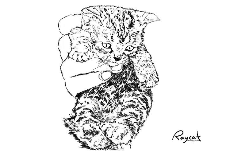 고양이 생후 2주 스케치
