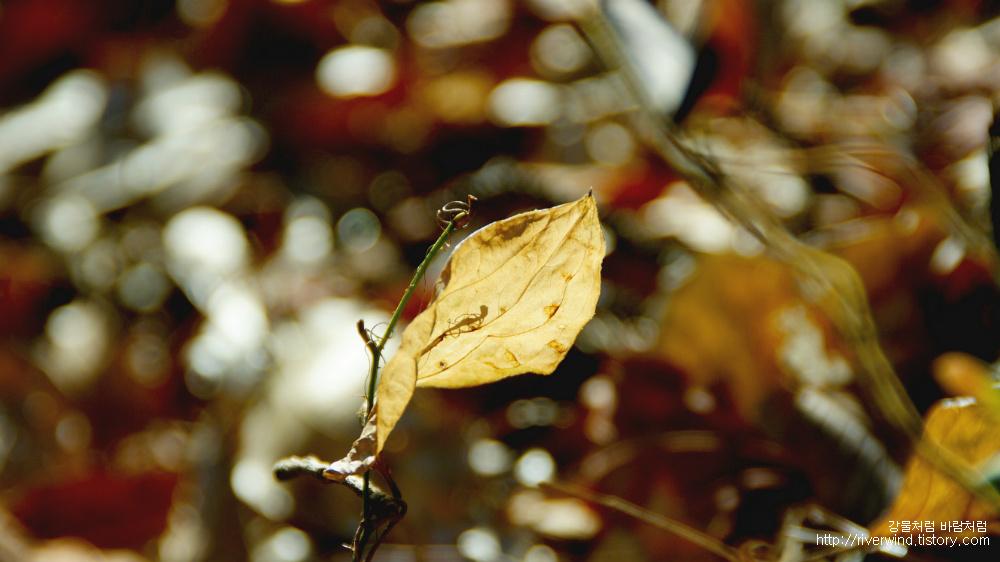 마지막잎새