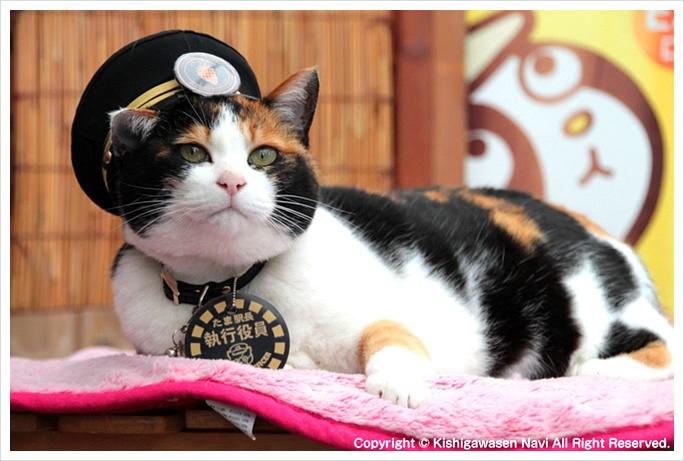 오사카자유여행추천 -  일본의 고양이 역장 타마와 만나러 가실래요?