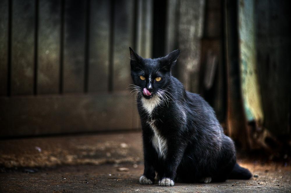 문래동에서 깡패고양이로 유명한 골목대장 고양이