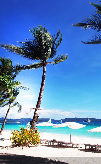 바닷가 야자나무