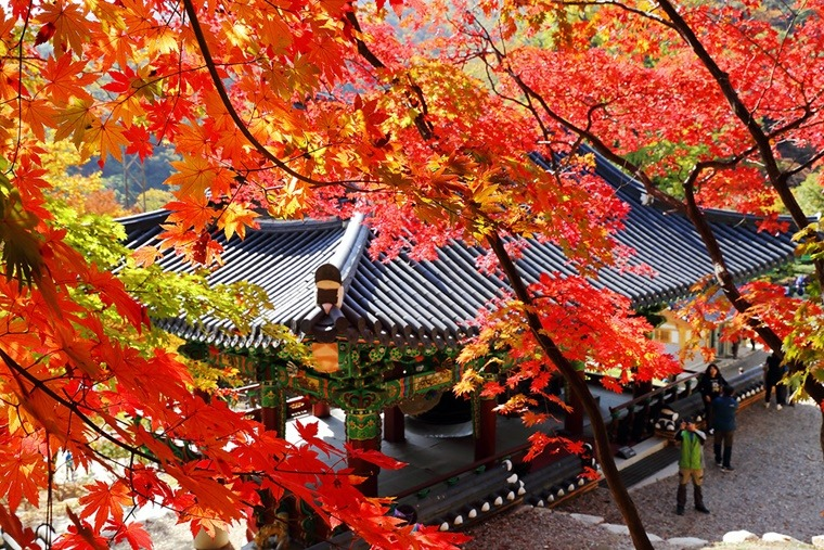 가을단풍여행 가을나들이장소 양평 주말여행