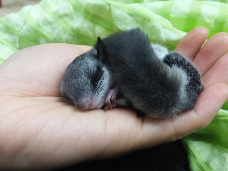 루블리제 다람쥐