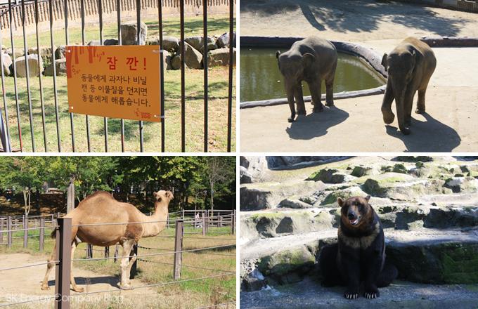 코끼리, 낙타, 곰과 경고문구입니다.