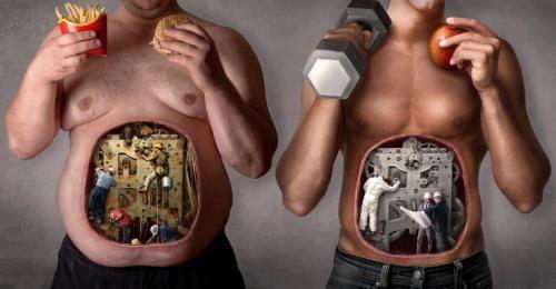 human body fat