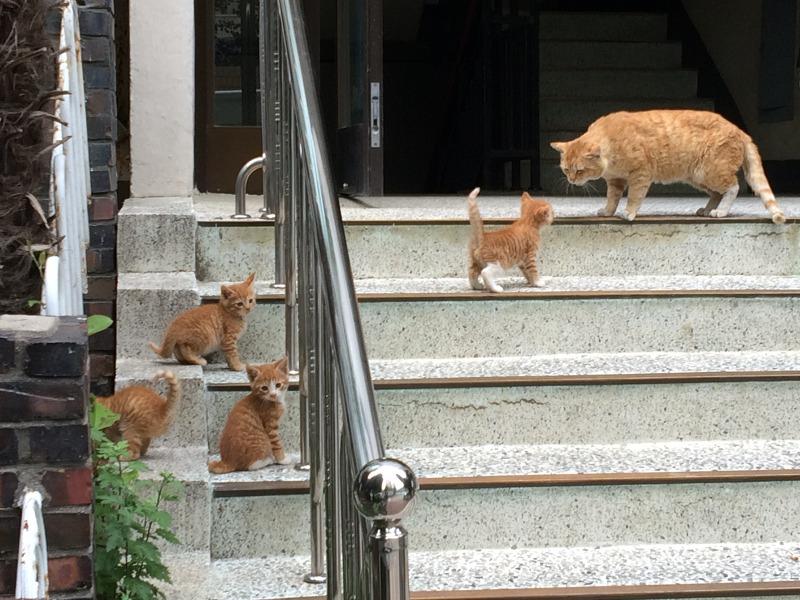 아파트 도둑고양이, 길냥이, 고양이, 고양이 새끼