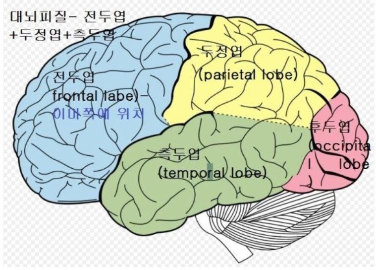 인간의 뇌 속엔, 파충류의 뇌과 포유류의 뇌도 함께 있다!