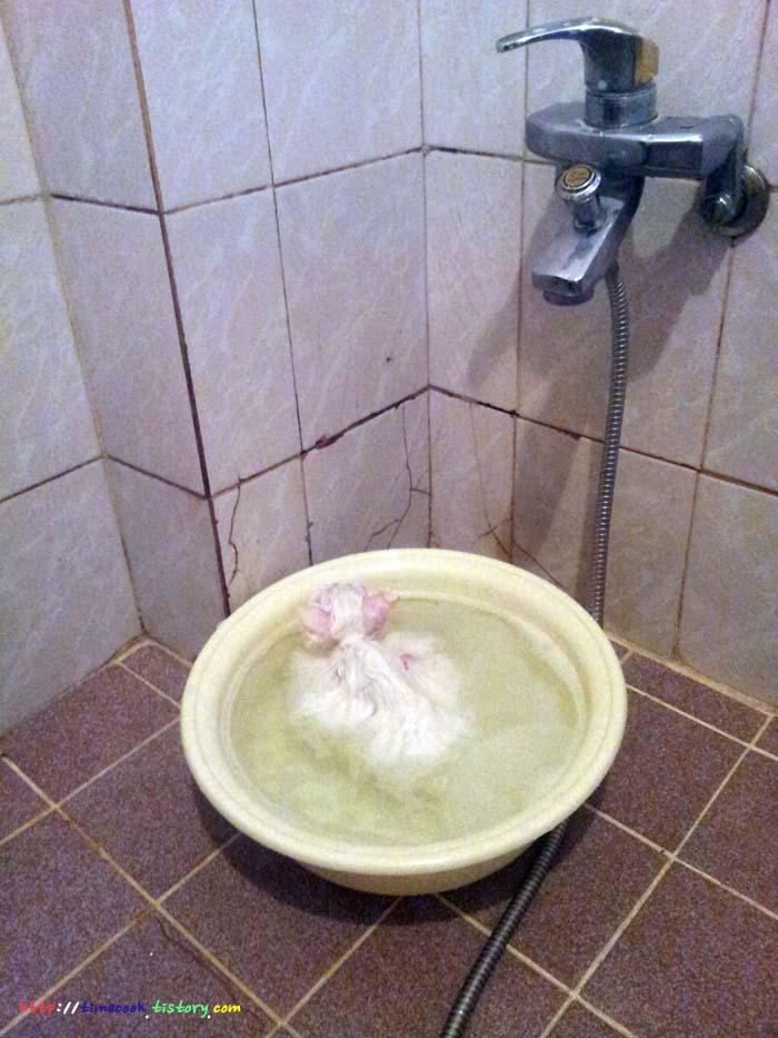 고양이 목욕, 고양이 탕욕, 고양이 정보, 고양이, 반려동물 고양이, 고양이 사진, 고양이 설이, 고양이 목욕시키기