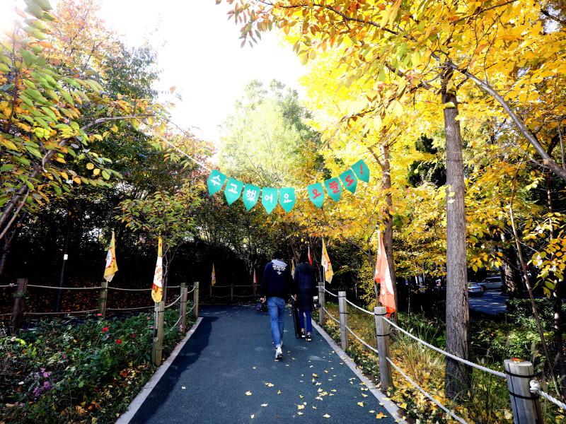 '가을 행복 가득' 강남구, 양재천 단풍축제