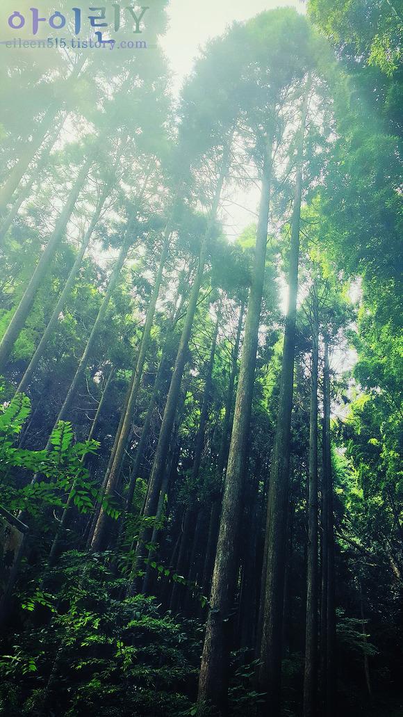다케오 녹나무