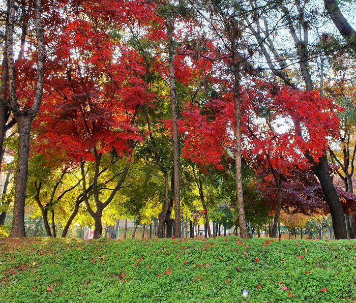 동네 공원 풍경
