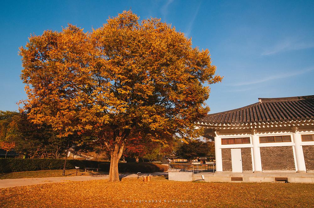 가을 한가득