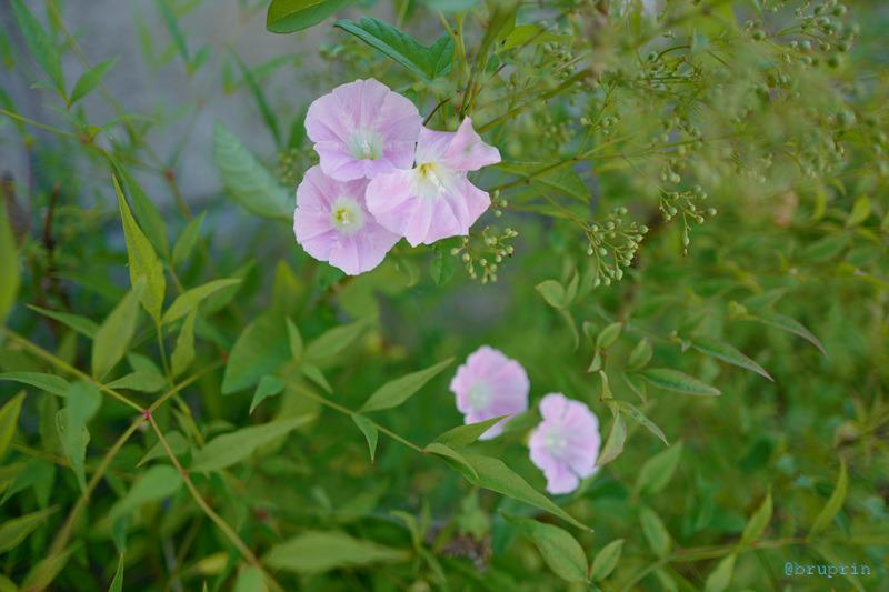 [BP/WU] 꽃