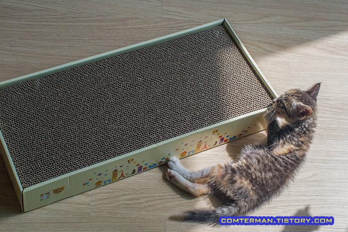 박스 스크래처 고양이