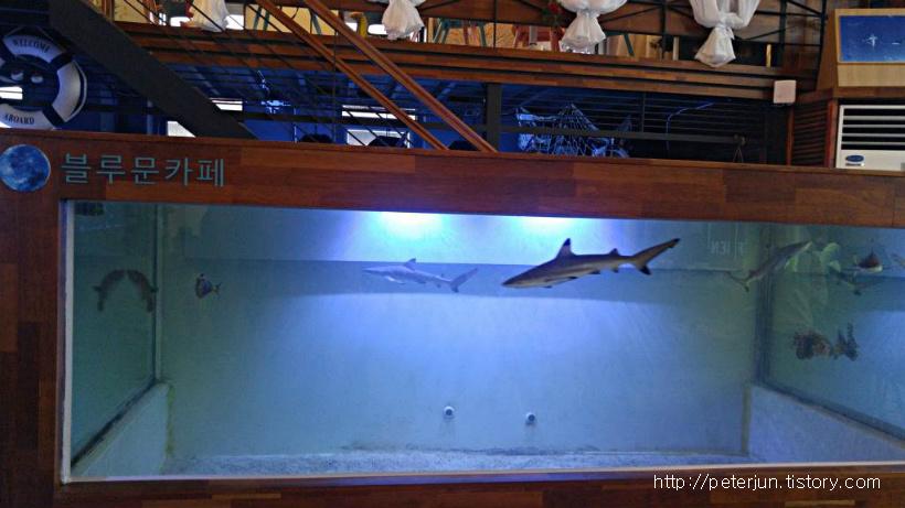 작은 상어들