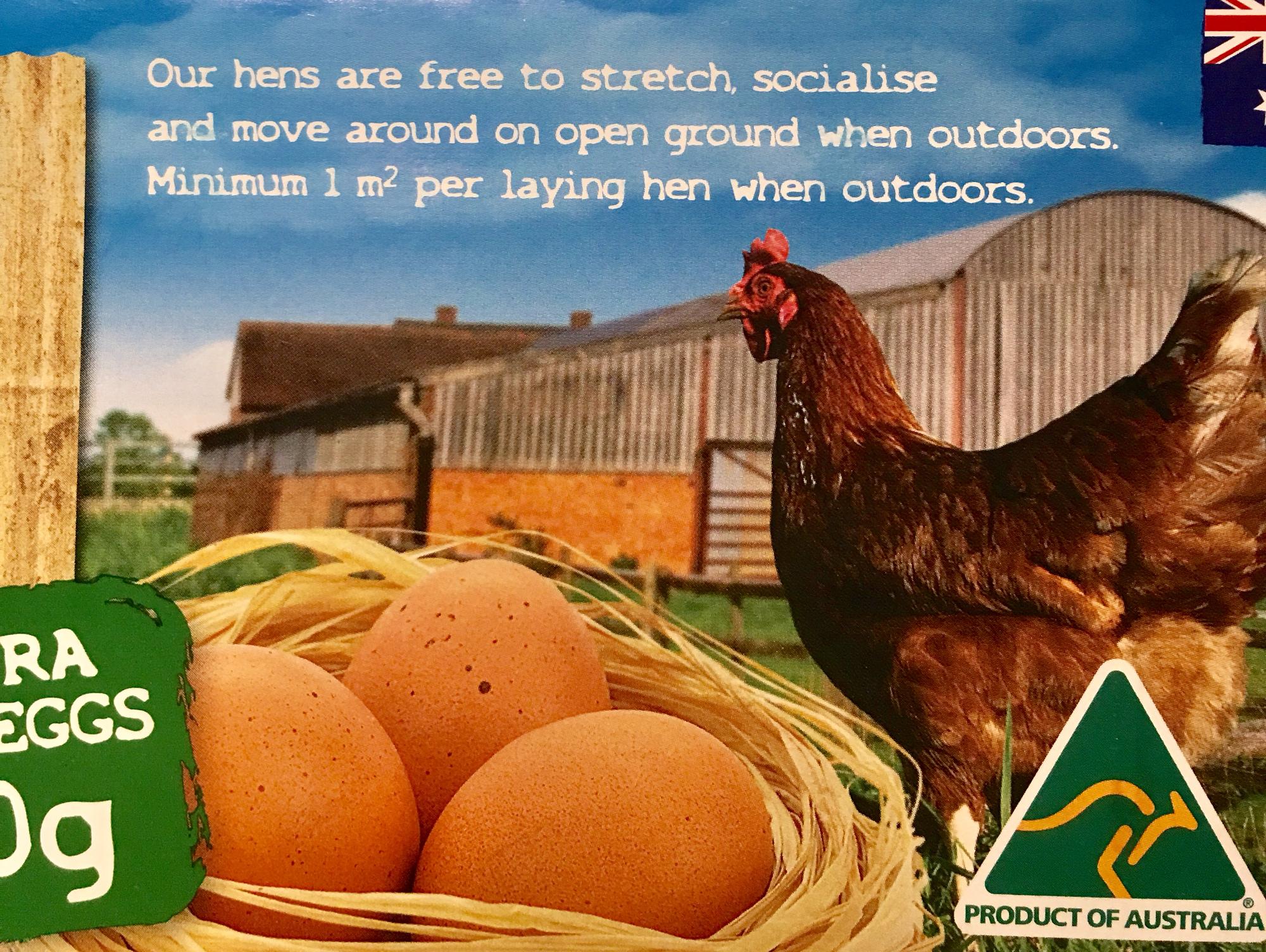 닭한마리당 1제곱미터