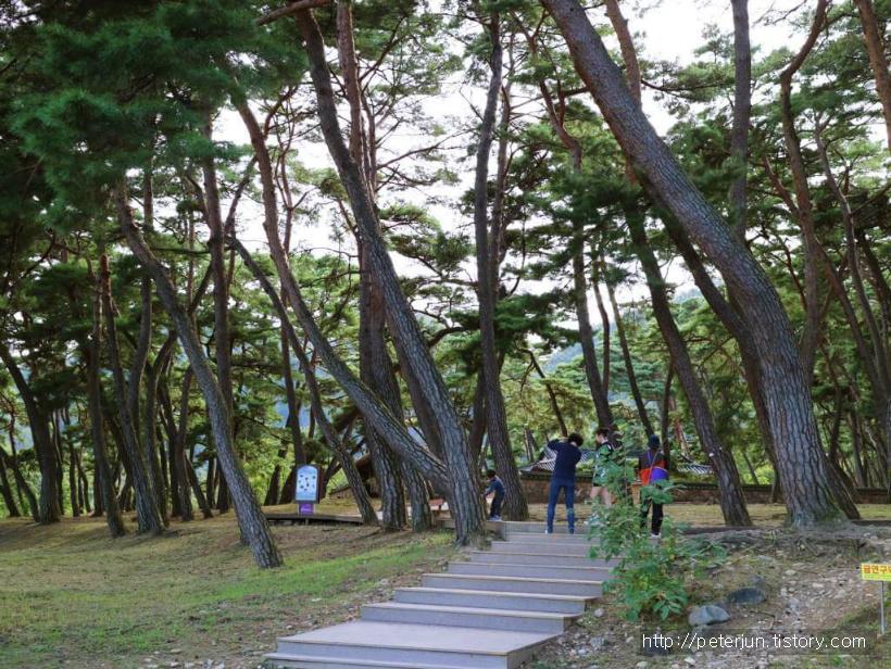소나무 산책길